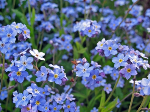Best perennial Flowers for Your Garden Picture
