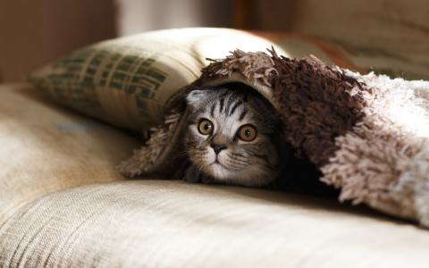 Common house items that can get your pet sick