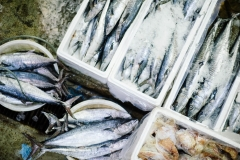 What to consider before opening a seafood business