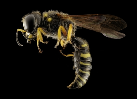 Why wasps are some of the most dangerous pests that can infestate a home